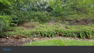 Mulch beds weeded, trimmed and edged. | by tbishop86