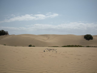 gran_canaria_dune_04 | by diuis