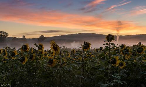 mountains sunrise farm newengland ct sunflower ellington jclay