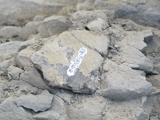 Wyoming Dinosaur Center, Thermopolis: Matt's second find | by mormolyke