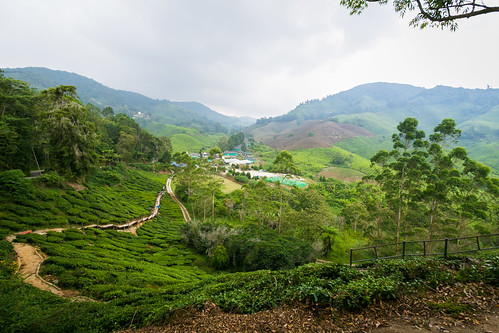 canonphotography cameronhighlands efs1022mmf3545usm ultrawide eos7dmarkii bohtea brinchang green nature outdoor creativecommons landscape hill teaplantation mountainside greenery scenic