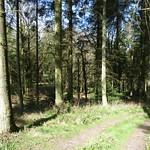 Irregular silviculture