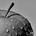 Melancholy Apple (111/365)