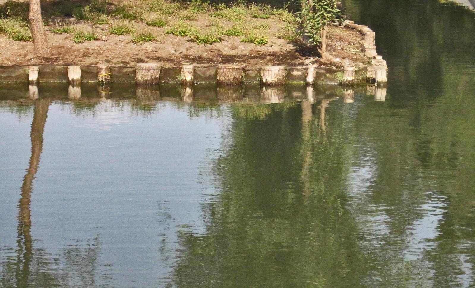 Parque Bicentenario 133