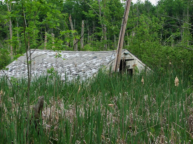 A HOUSE IN THE SWAMP IN MAY 2012