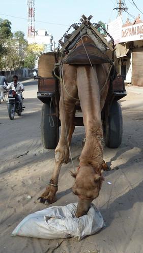 india pushkar rajasthan asienmanphotography