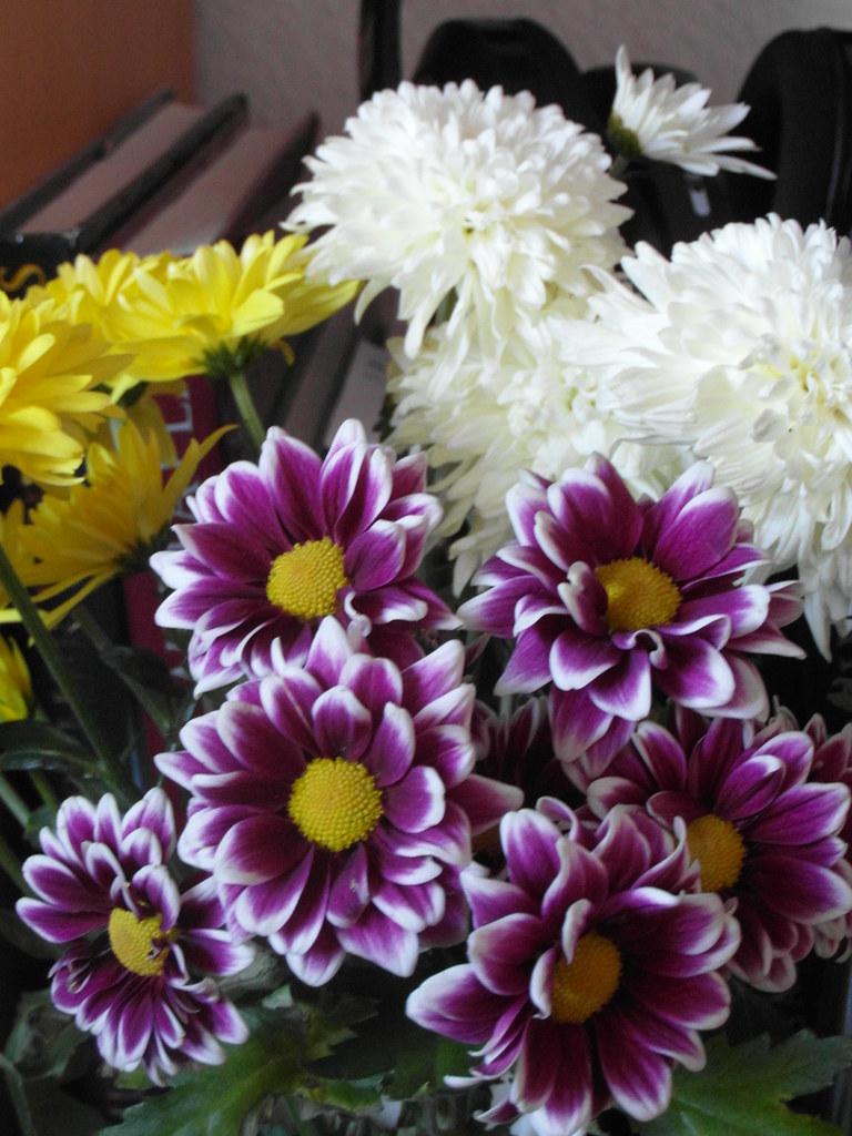 So spricht die Blume, und drückt, indem er es spricht, an ihren Schwanenhals sein glühendes Gesicht, und fühlt, vom Arm der Liebe sanft umwunden, den ganzen Wert der eilenden Sekunden 437