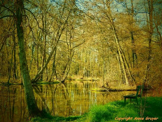 Le banc et les arbres enchevetrés