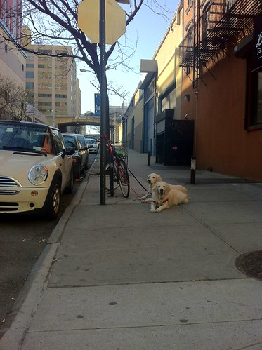 Daily Deli Dogs 27 March 2012 | by epc