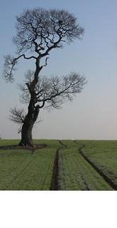 Maria's Tree 2