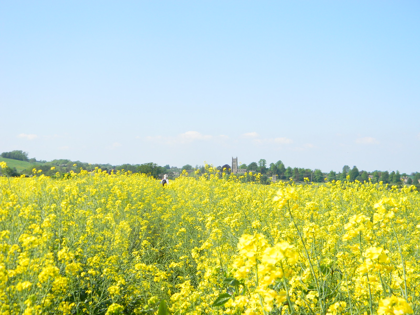 Rapefield with Chipping Camden church in distance Moreton-in-Marsh Circular