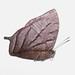 Charaxinae - Leafwings