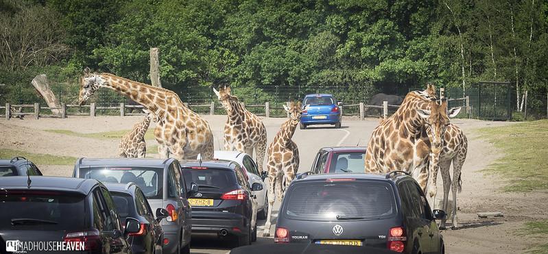 Safaripark Beekse Bergen - 0201