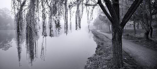 usa white lake reflection tree photography virginia us path unitedstatesofamerica foggy eerie willow dreamy lonely melancholic blak