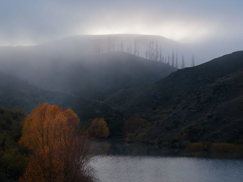 autumn trees mist lake central nz end dunstan sidearm oatgo ripplesnotnoise