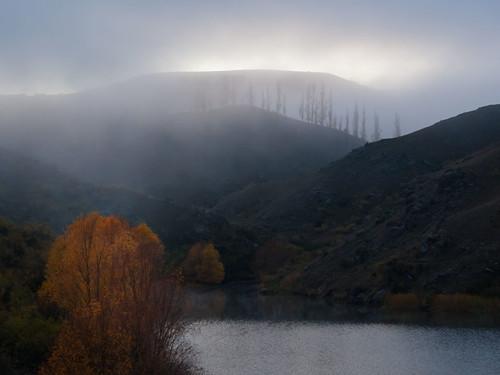 autumn trees mist lake central nz end dunstan sidearm oatgo ripplesnotnoise
