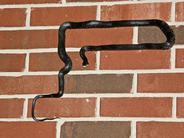 Snake on the wall