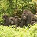 Horské gorily, foto: Daniela Hranaiová, Člověk v tísni