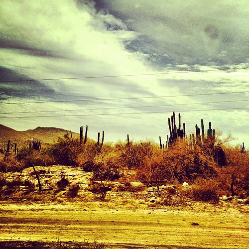 the land of cactus   by sarahwulfeck