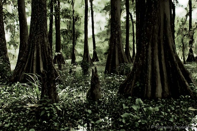 The Ghostly Swamp