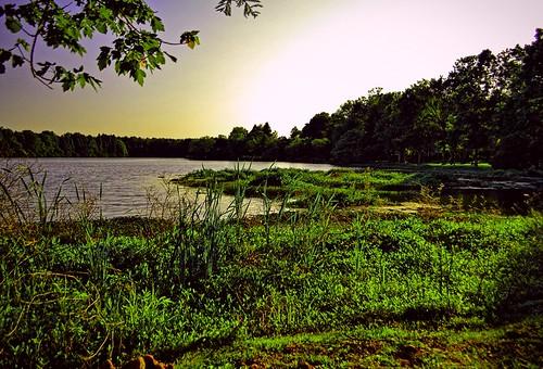 sunset lake sc water grass creek berkeley pond south goose plantation carolina crowfield