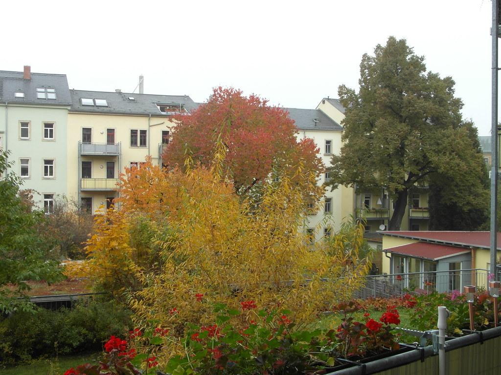 Dresden bringt auch ich euch würdige Gabe, Kranz für Kranz, und Lied für Lied, Blumen mag ich zwar auch bieten, aber frostig, steif und kalt, wie der Winter solche Blüthen höhnend uns ans Fenster malt in Plauen 400