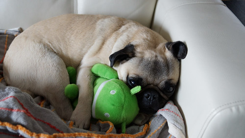 Android plush with pug | by trophygeek