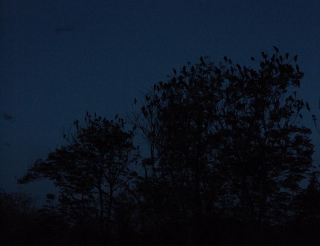 an abrupt Sunday morning at Nal Sarovar  Birds chirping, a