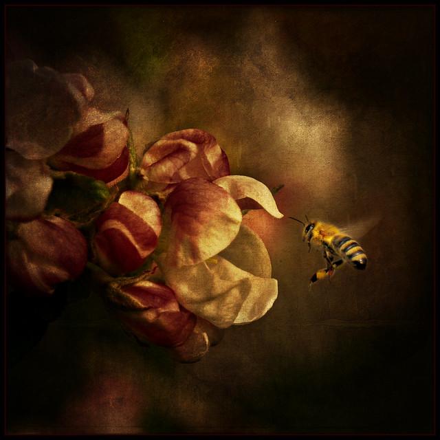 apple bee . . .