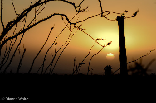 sunset arizona orange silhouette yellow landscape gold golden tucson hazy saguaronationalpark ocotillo