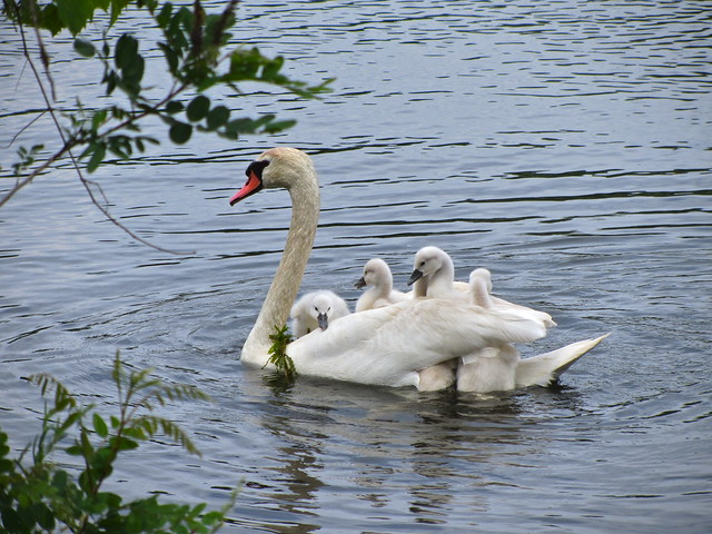 Taking the youngsters for a ride.