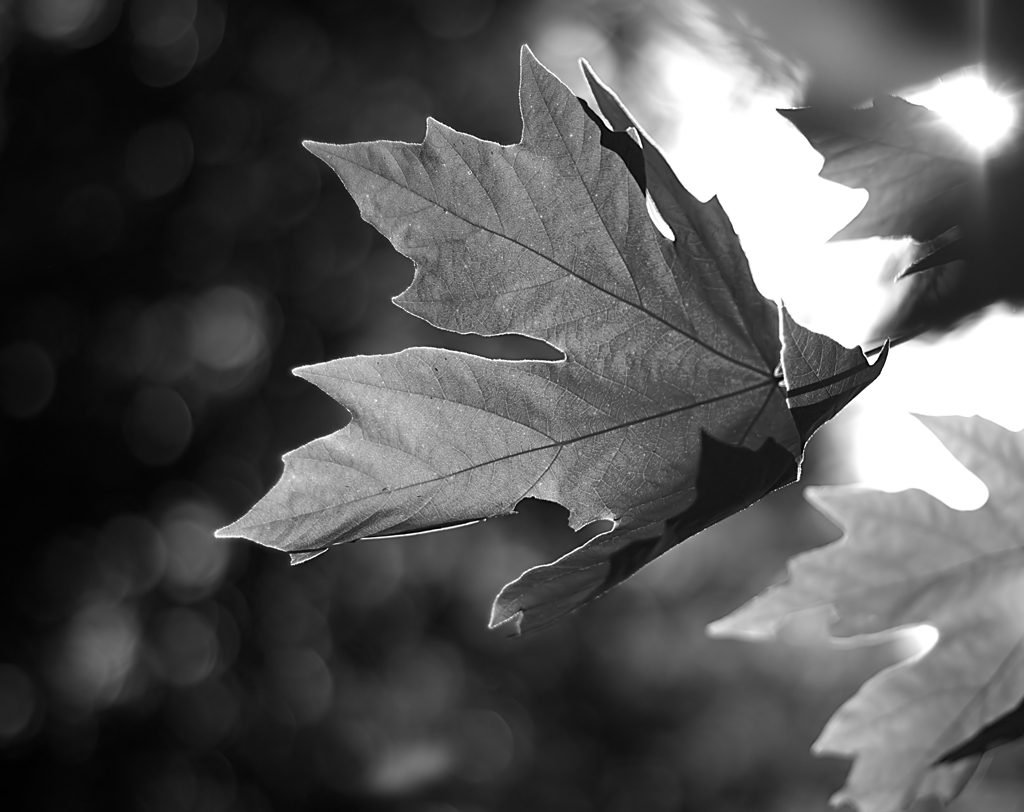 Leaves In The Wind Photography