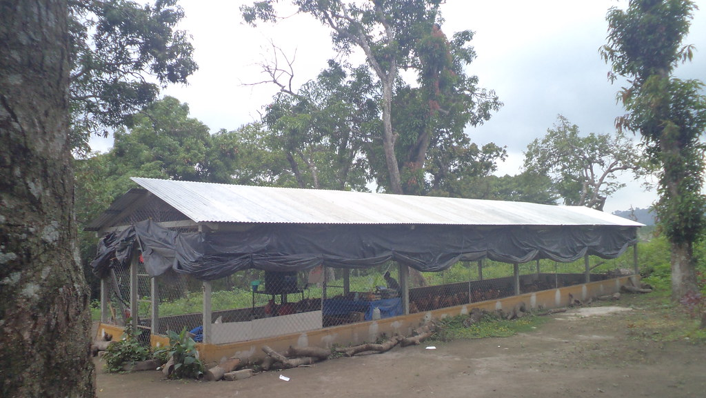 The Farm S First Poultry Shed The Women Plan To Build Two
