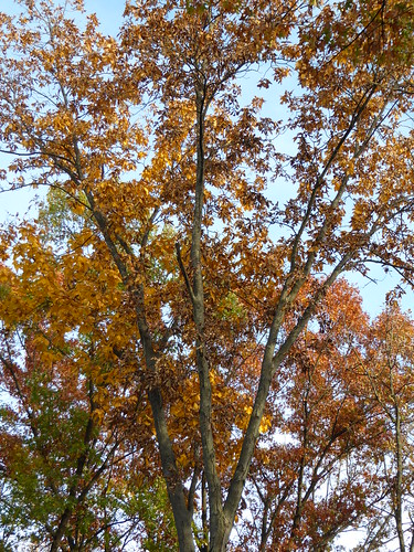 trees red orange fall landscape flora wolfroadprairienaturepreserve westchesteril