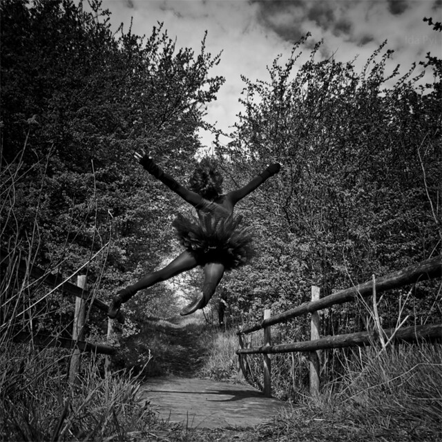 Black Swan Landing