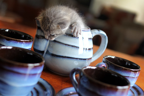 kitten in a teapot 2 | by Serenae