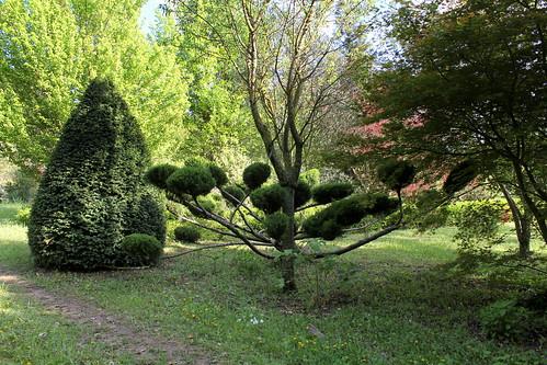 Niwaki, la taille en nuage, l'art topiaire, dans le jardin de Michel 21905713790_bf806d05f0