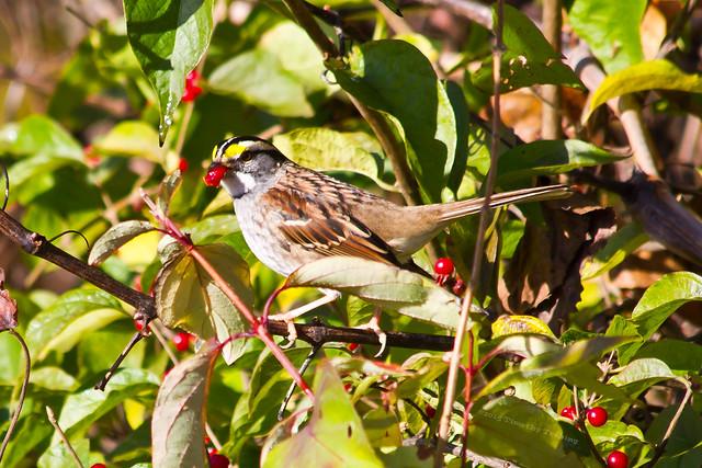 Beckemeier Bird Watching