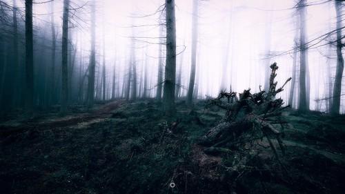 atmosphere canon contrast creepy fog forest landscape lifeless longexposure nature perthshire scotland track trees winter