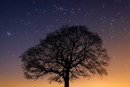 blue light sunset sky orange tree nature silhouette night stars treesilhouette lowlight glow outdoor dusk branches astrophotography astronomy heavens sevensisters constellation pleiades starrynight starcluster