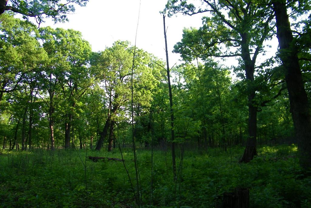 Danada Forest Preserve Wheaton Illinois Visited The