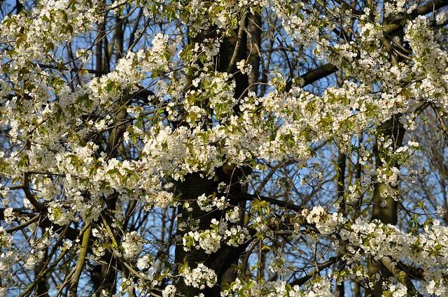 Spring  it's now ! / Le printemps c'est maintenant  ! - 1/2