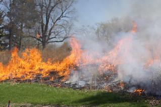 Burning Grasses