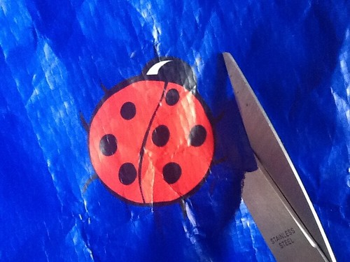 Other ladybirds begin to escape from other shopping bags