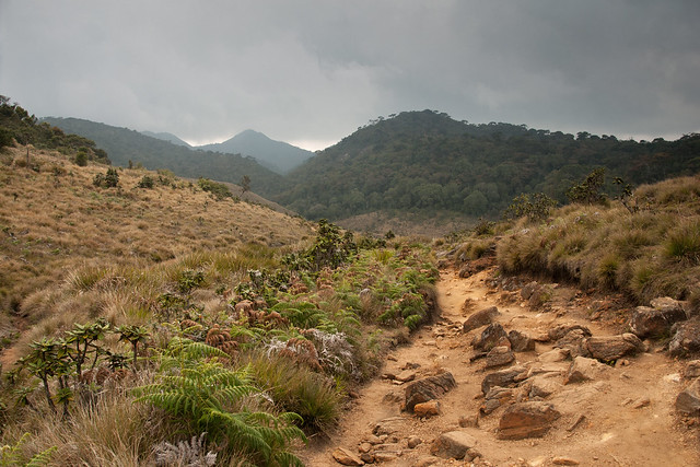Road view, Horton Plains National Park, Sri Lanka