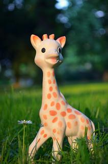 Sophie Giraffe (http://www.pusteblumenbaby.de/) | by Maja&Co