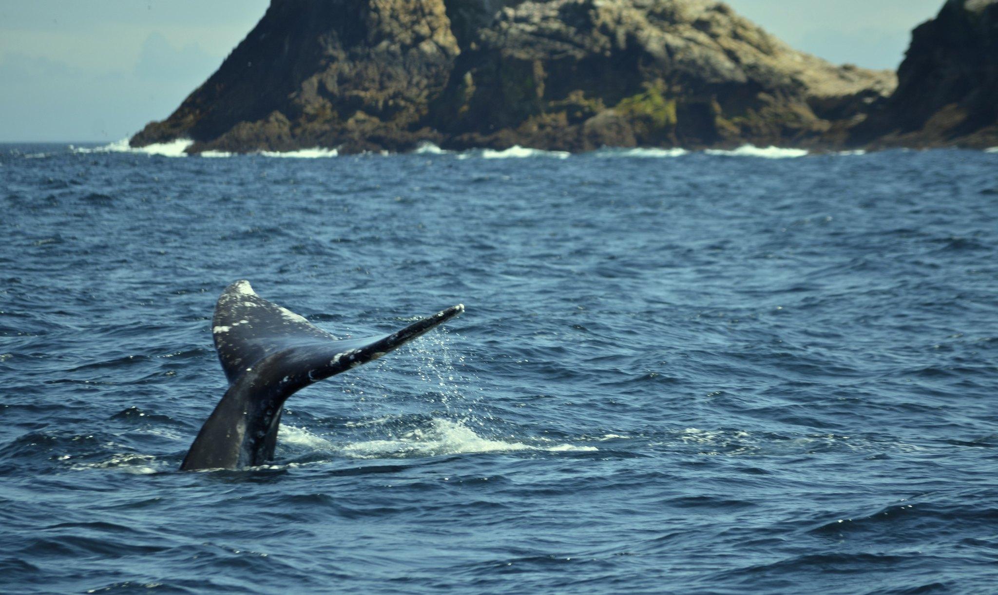 Grey Whale! // Grauwal!