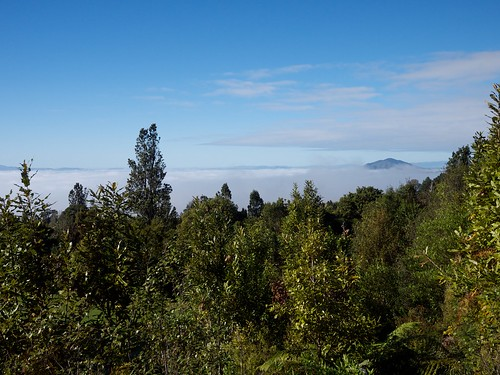 newzealand northisland tramping forestpark gf1 pirongia lumixg20f17