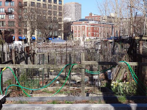 Berkeley Community Garden   by craigdietrich