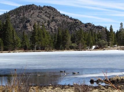 Geese on Sprague Lake